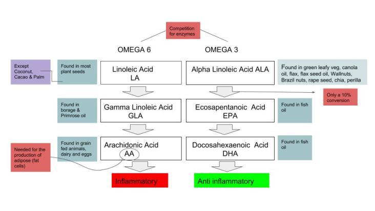 Omega 6 omega 3